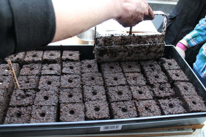 taken at the soil blocking workshop in the Anthropology Building Greenhouse on March 13