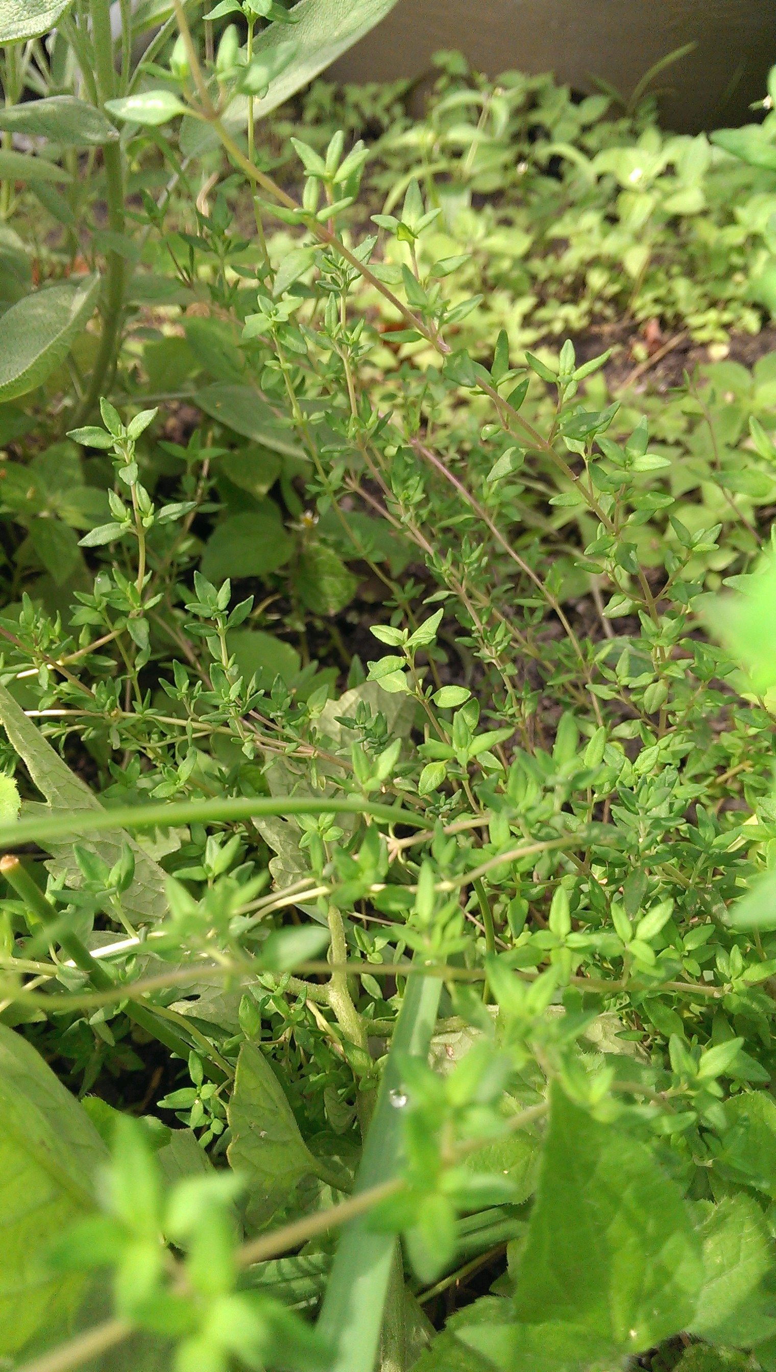 Parsley, Sage, Rosemary, & Thyme – Dig In!