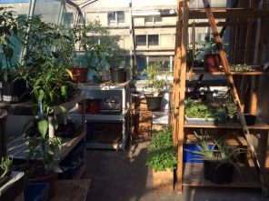 Anthropology Greenhouse